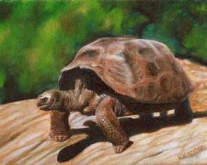 tortoise dude