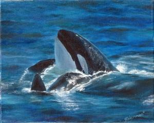 pretty whale