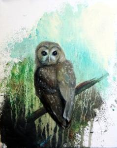 owl dailt